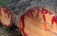 Kanayan ağaç