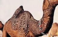 Bu deve başka deve